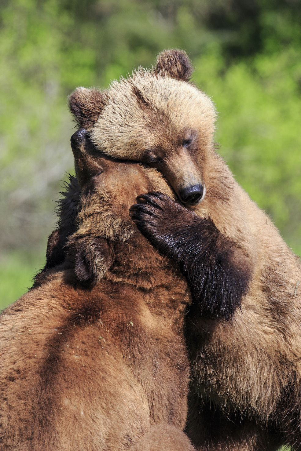 50 of the craziest laws in every state brown bear bear