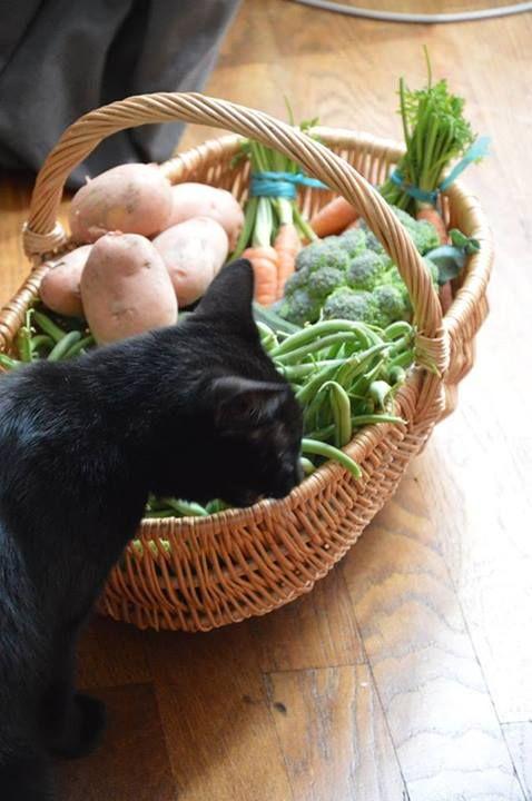 Cat vs. Vegetables