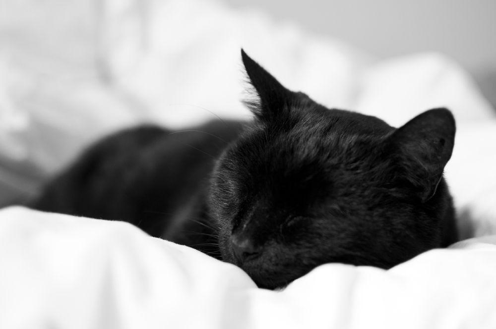 Картинки черные кошки спят