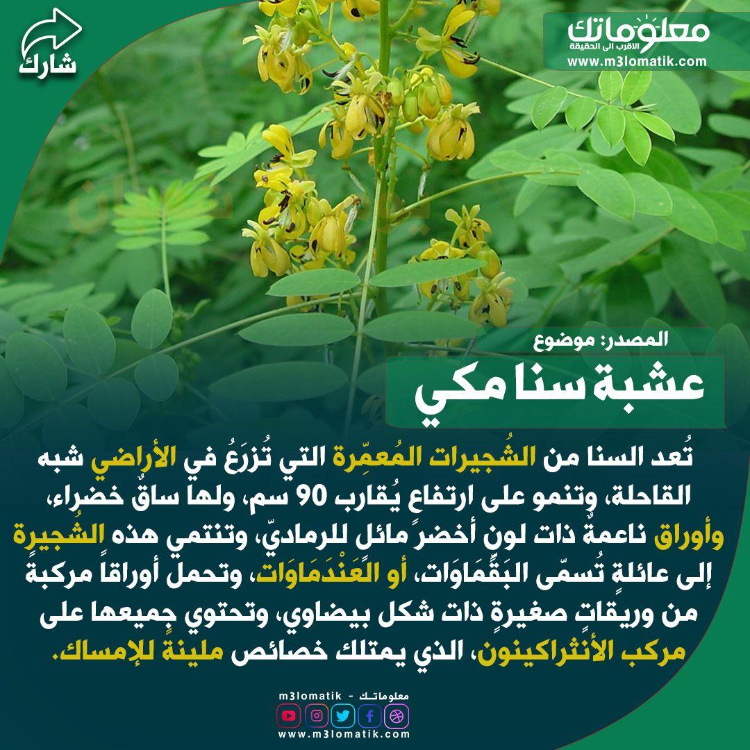عشبة سنا مكي Herbs Plants