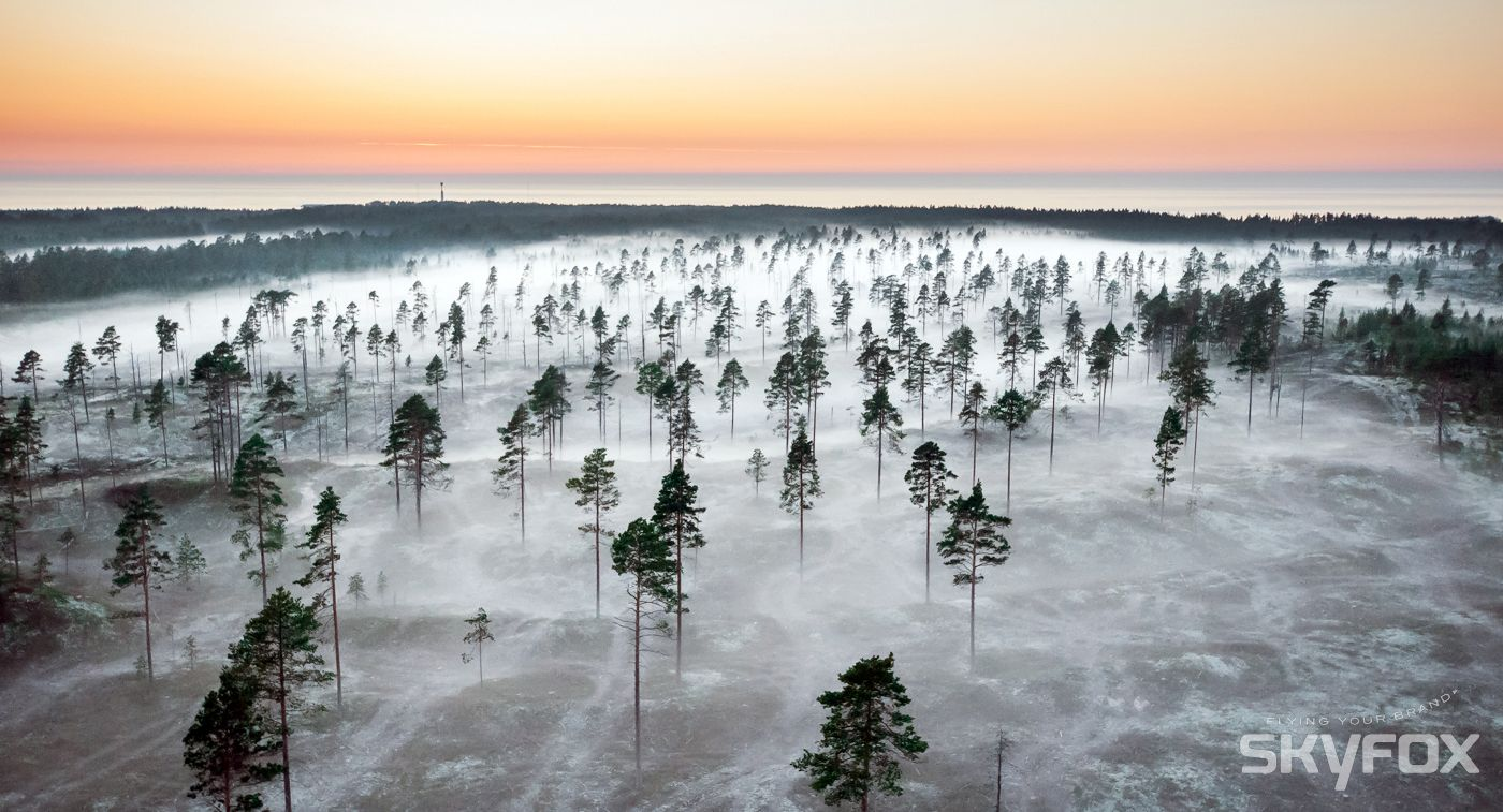 Usva nousee metsään