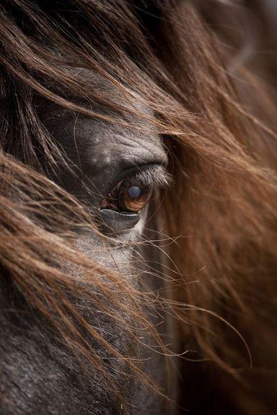 Des chevaux qui savent qu'ils sont épiques   – Pferde