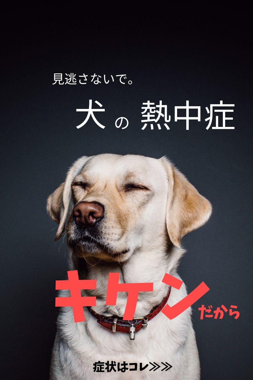 愛犬の熱中症 知っておきたい危険な症状 犬 ペット 犬 熱中症