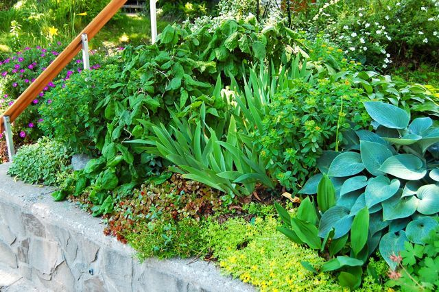 Toronto Gardens Pushing the limits of dry shade Gardening