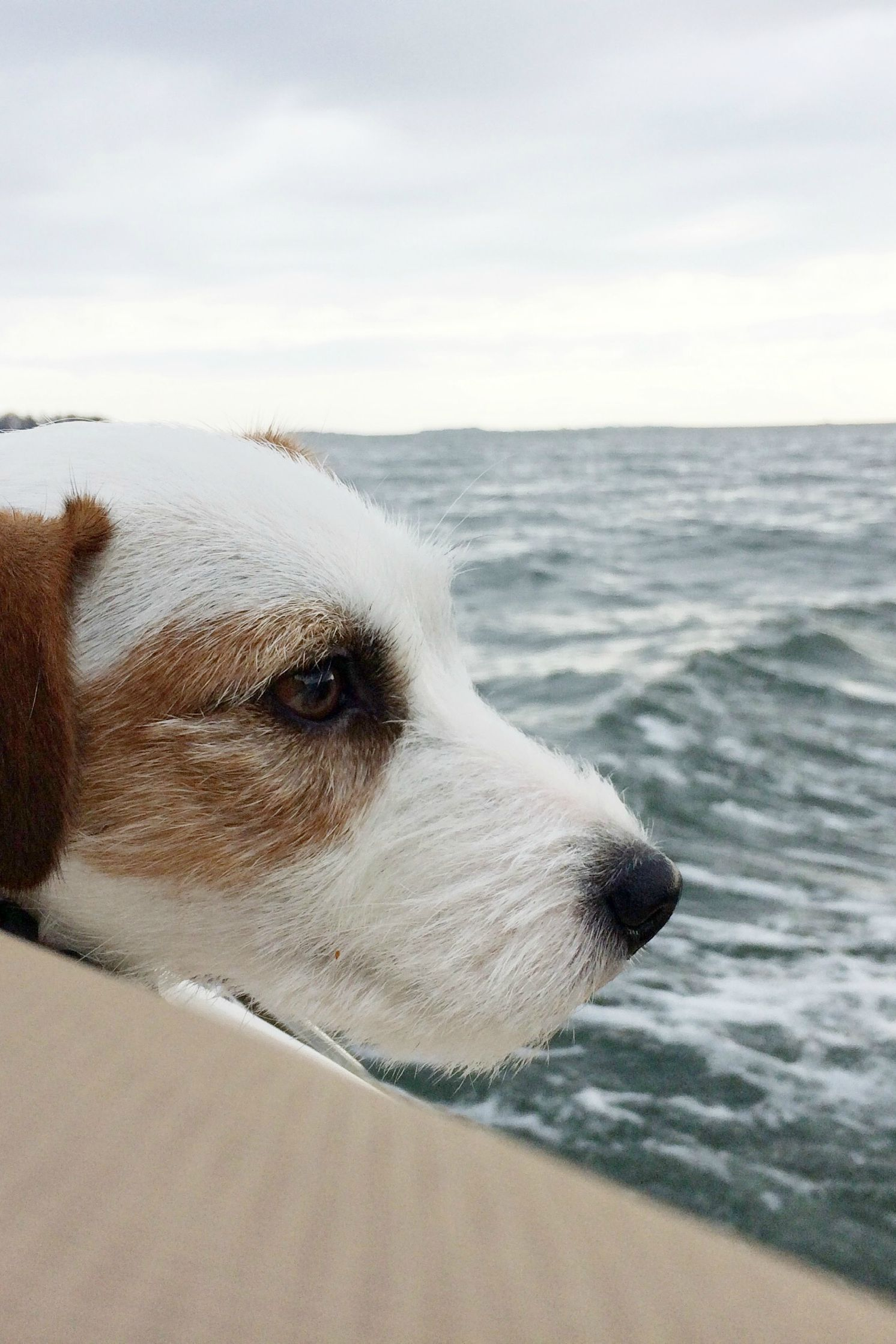 Sailor Dog On A Boat Jrt Puppy At The Sea Outdoor Adventures With