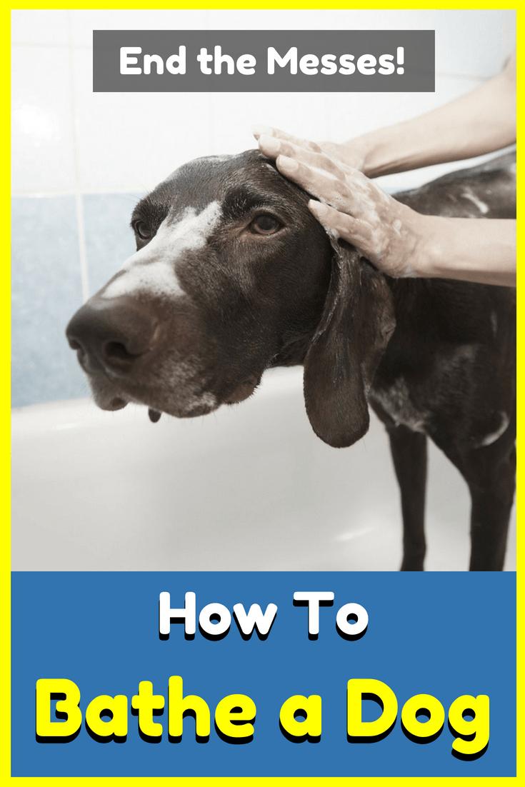 How To Bathe A Dog Dogs Bathing A Puppy Dog Bath