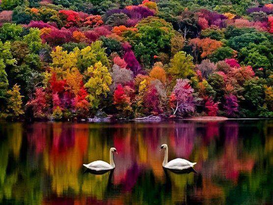 New Hampshire, autumn