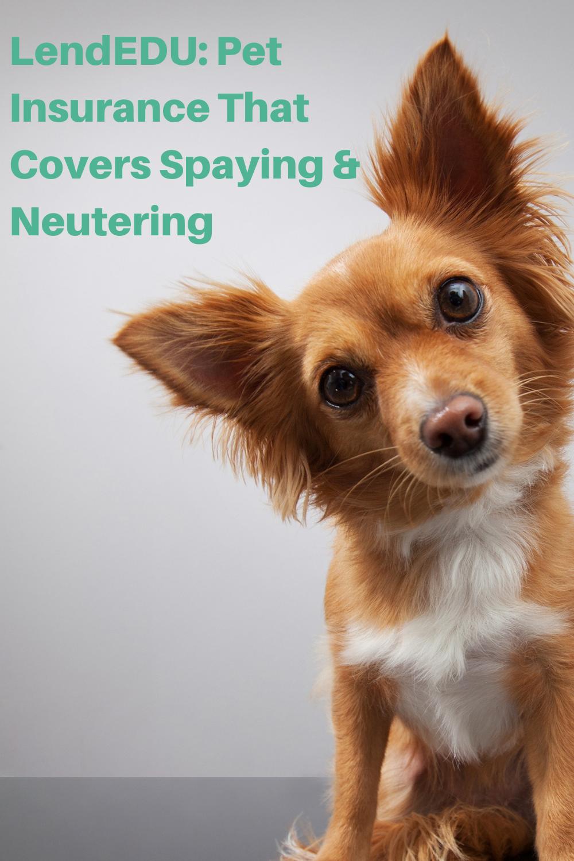 Pet Insurance That Covers Spaying Neutering Lendedu In 2020 Pet Insurance Pets Wellness Plan