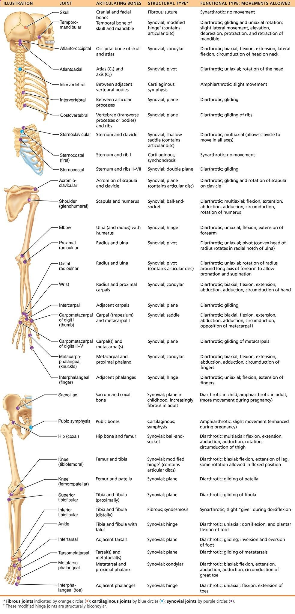 Human Anatomy and Physiology 10e - Pearson eText 2.0https://etext ...