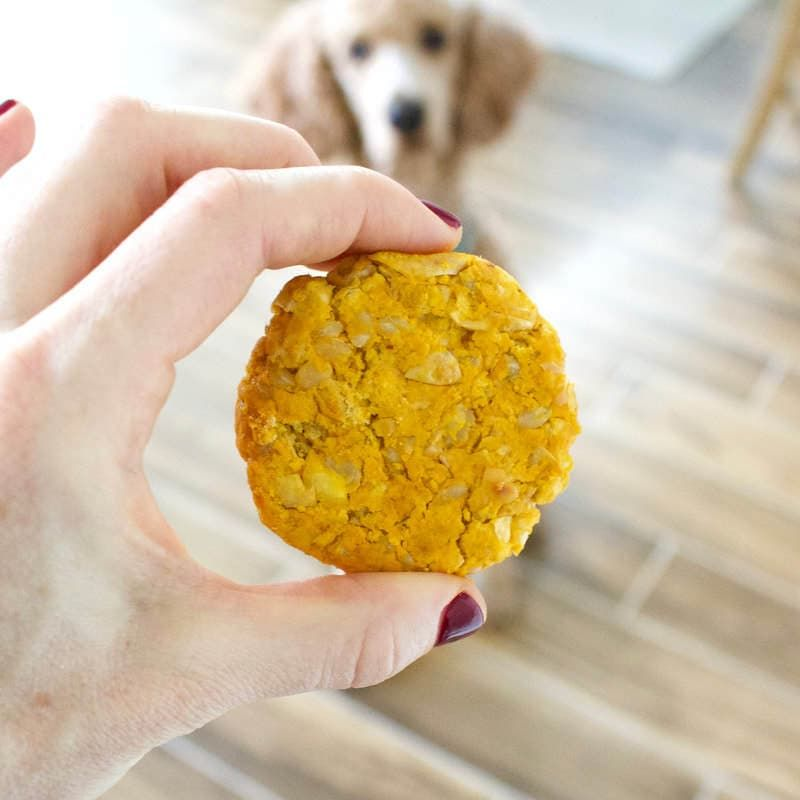 Pumpkin Chickpea Patties For Dogs