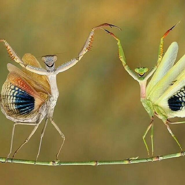 These Preying Mantis Look Like Aliens Animals Cute Animals Animals Beautiful