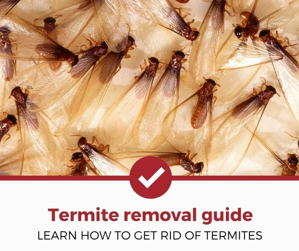 How To Get Rid Of Termites GUIDE) Termites