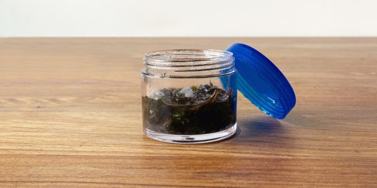 How to make peppermint oil easy diy essential oil recipe