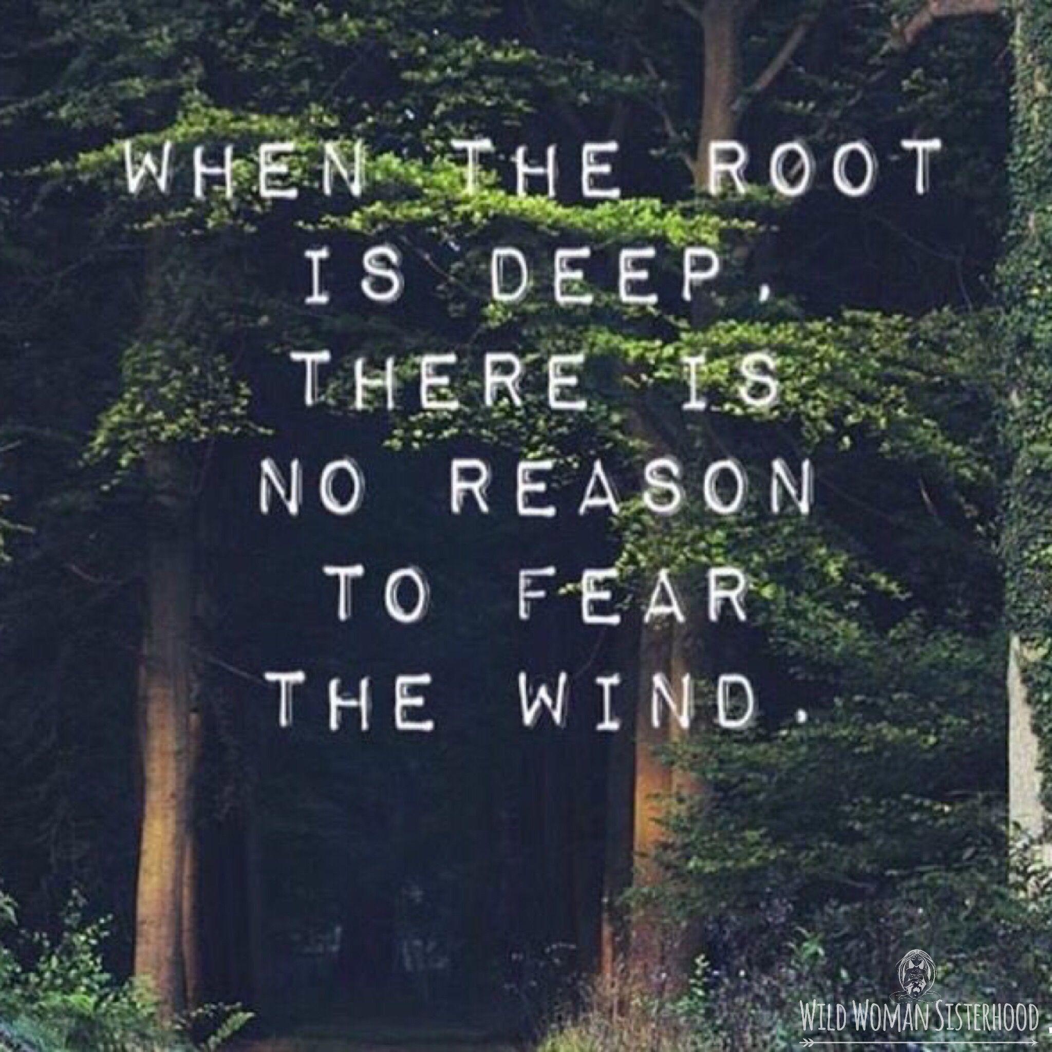 Cuando la raíz es profunda, no hay razón para temer el viento - THE FOREST AND THE WILD WOMAN
