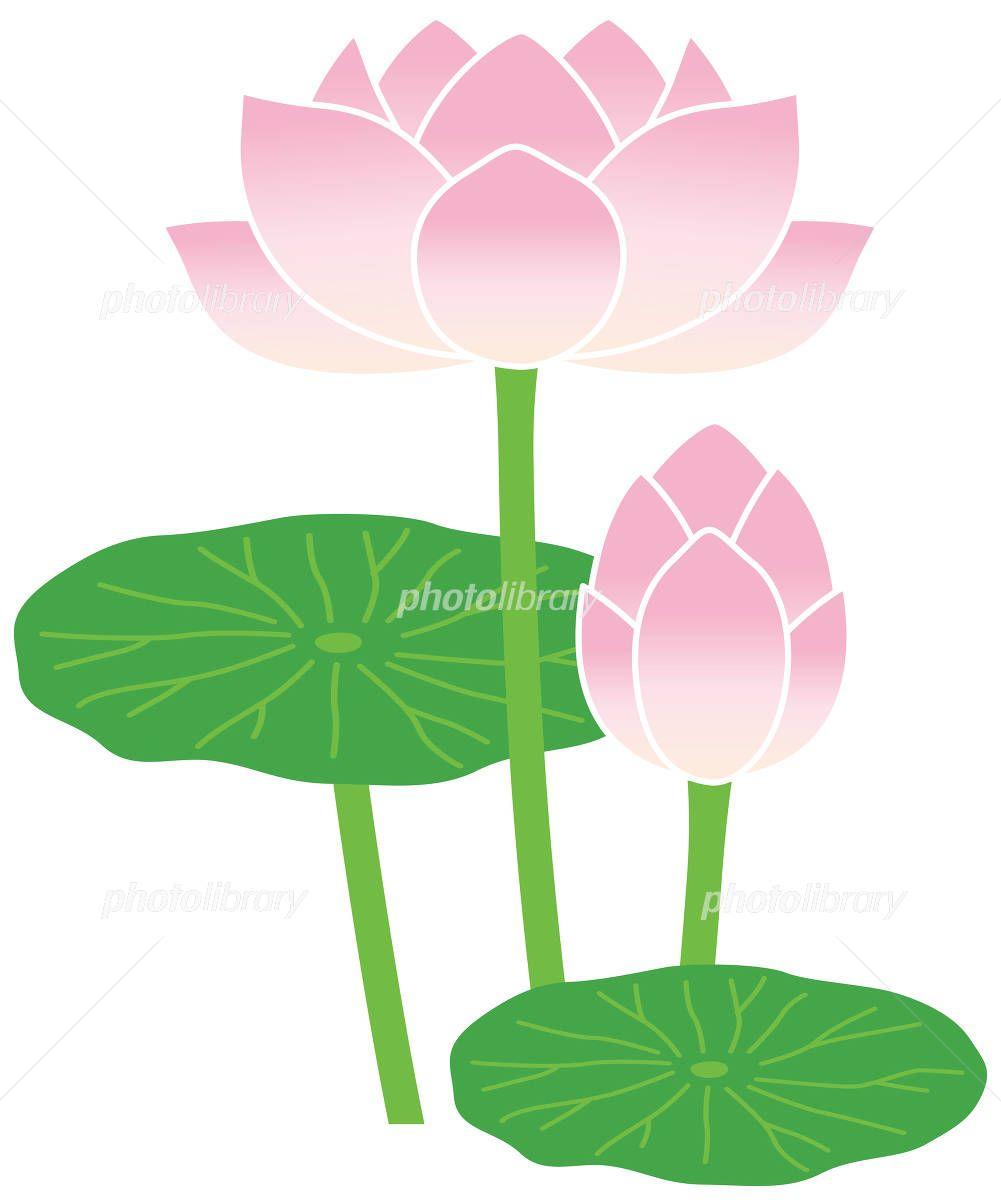 ハスの花 イラスト素材 フォトライブラリーは 日本のストックフォトサイトです ロイヤリティーフリー画像を販売 動画素材はsサイズすべて無料 S 220円 Id 3840125 ハスの花 はこちら 2020 ハスの花 花 イラスト 花