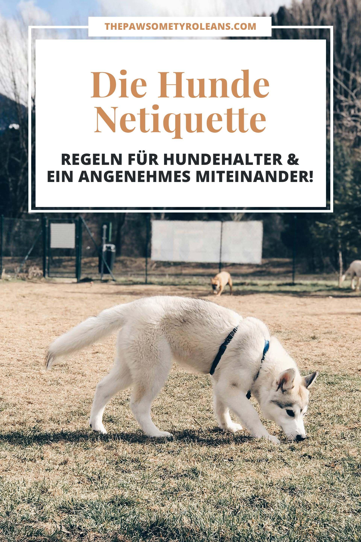 Hunde Knigge Hunde Netiquette Regeln Fur Hundehalter Kleiner Hundehalter Kurs Verhalten Von Hundehaltern Tipps Fur Die Fr Halte Durch Tierheim Hunde