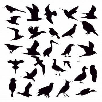 Collection Bird Animal Outline Beak Nature Flight Elements Nightingale Illustration Symbol Humming Bird B Bird Silhouette Silhouette Art Flying Bird Silhouette
