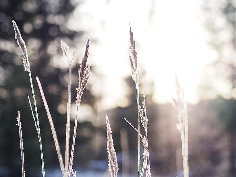Talven ensimmäiset