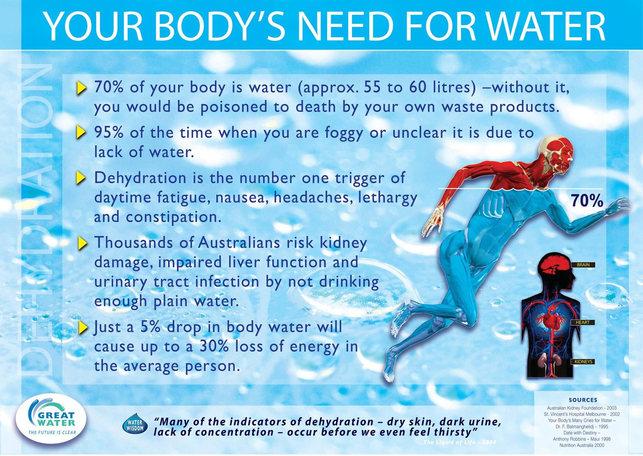 what is water used for in the body