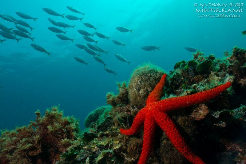 Bien connu Classification des animaux marins de Méditerranée | Classification  KQ89