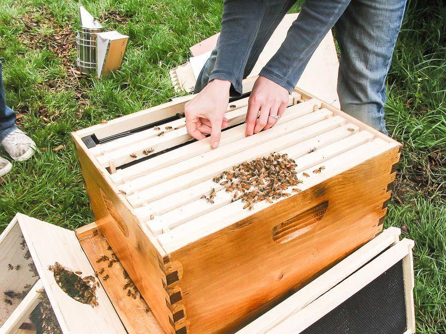 Keeping Bees Hobby by sheholdsdearly.com #keepingbees ...