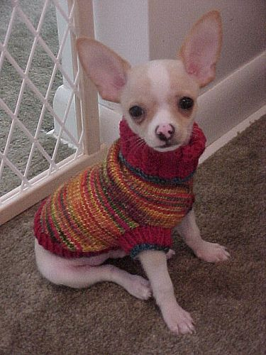 Astro Sweater Pattern By Corinne Niessner Dog Sweaters