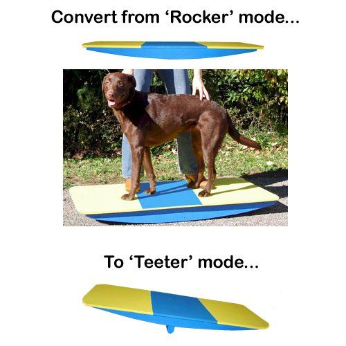 Pin By Birthpaws On Dog Fitness Dog Daycare Near Me Dog