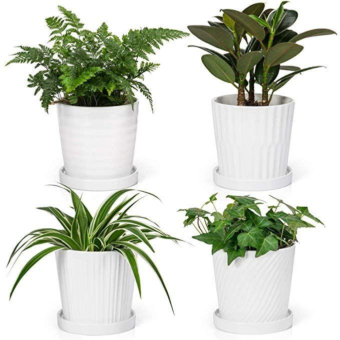 Amazon Com Dahey 5 1Inch Ceramic Succulent Planters P*T 640 x 480