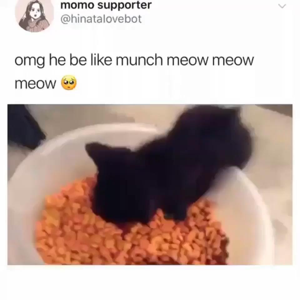 Photo of kitten sings while munching