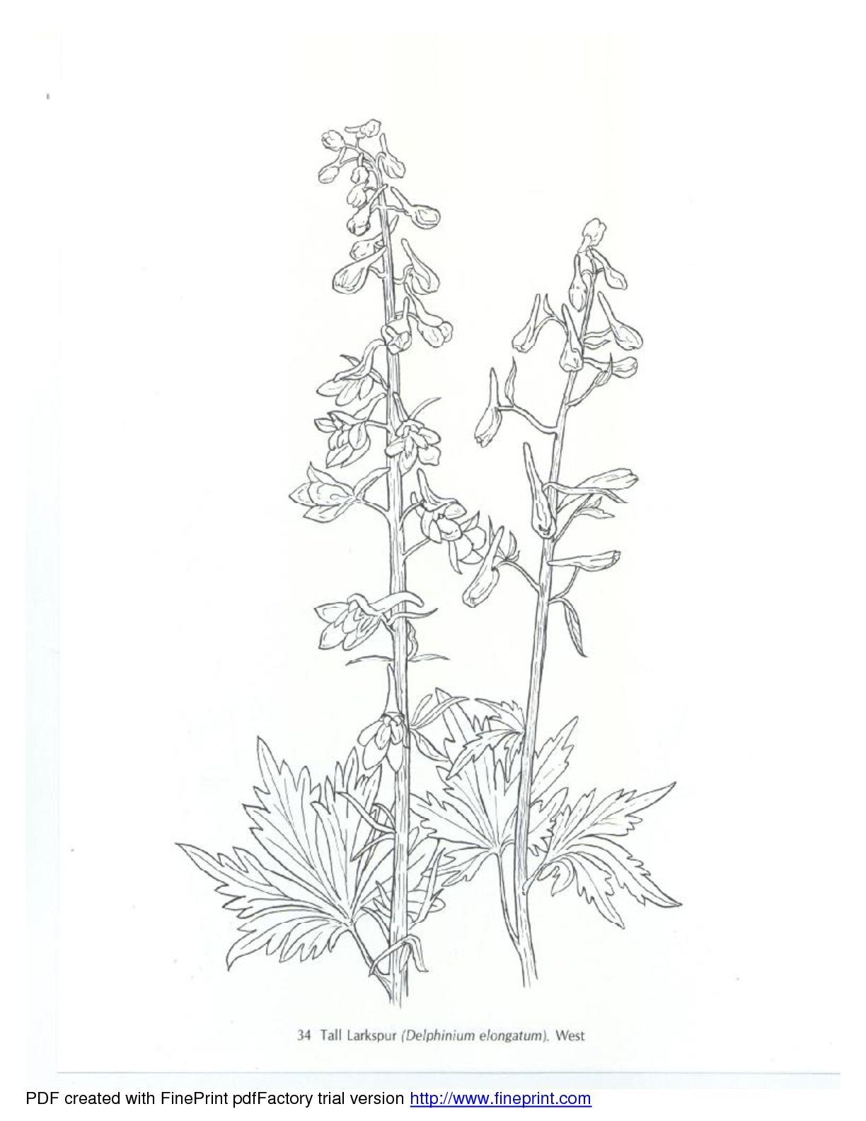 American Wild Flowers   Flower drawing, Flowers, Swear ...