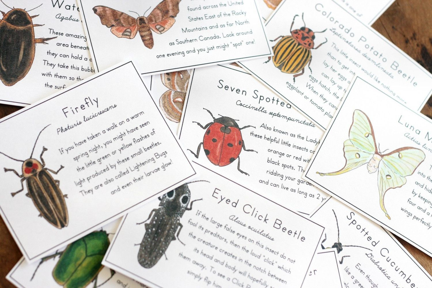 Insect Cards With Moths Amp Beetles Printable By Alicecantrell 3 75