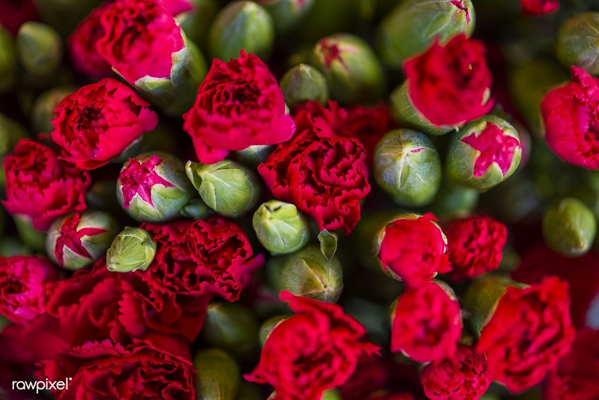 Red Carnation Flowers Textured Background Free Image By Rawpixel Com Flower Texture Carnation Flower Flowers