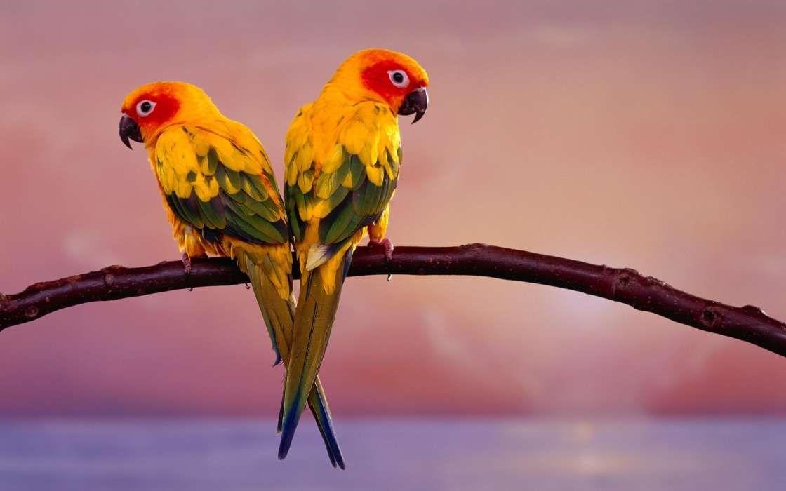 Kostenlose Handy Wallpaper Tiere Vogel Papageien Herunterladen Papagei Vogelbilder Schone Vogel
