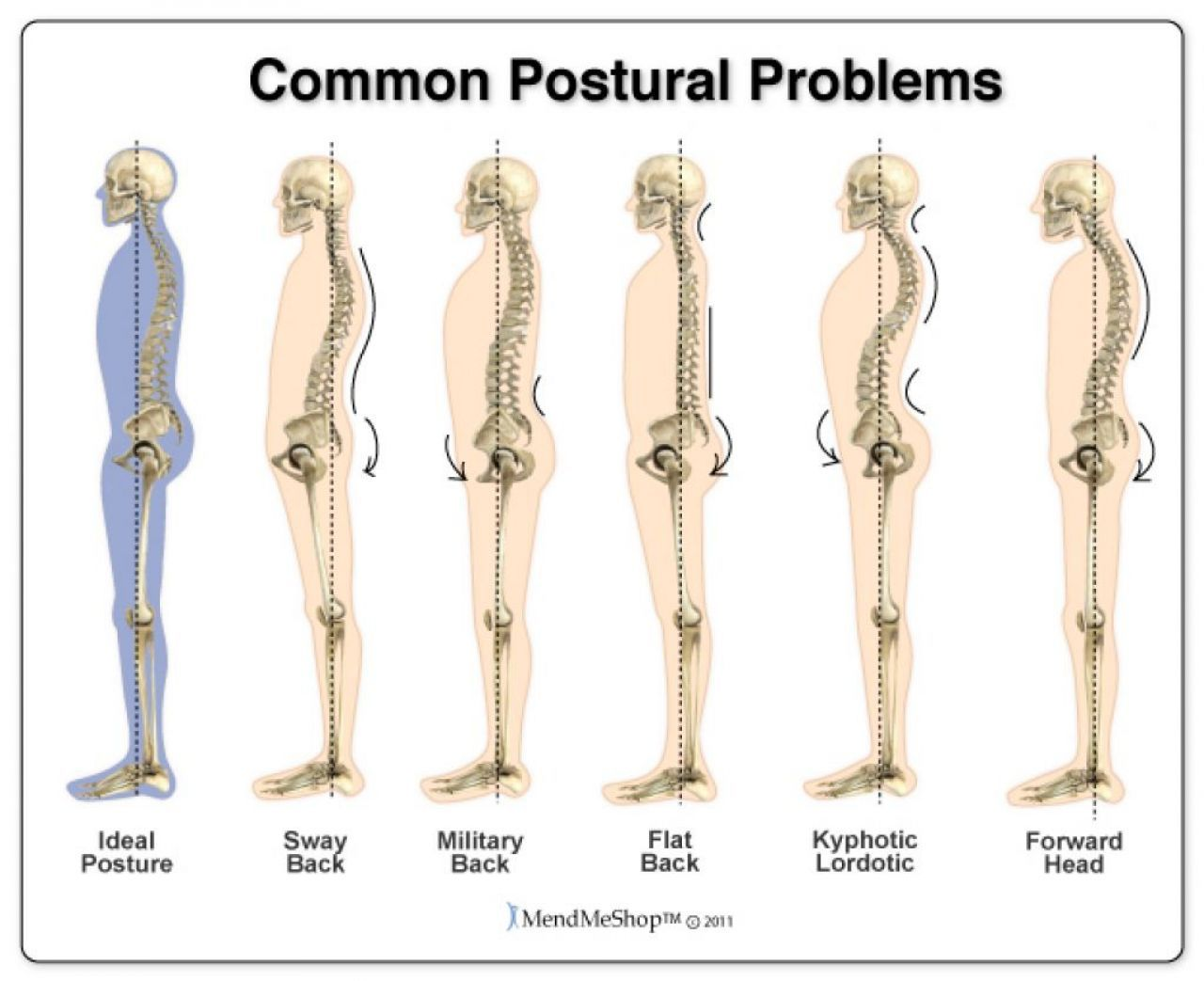 Human anatomy lower back