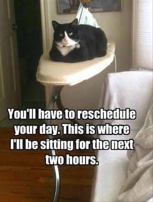 Random Amusing Animals images (01:16:29 AM, Monday 02, February 2015 PST) – 8 pics