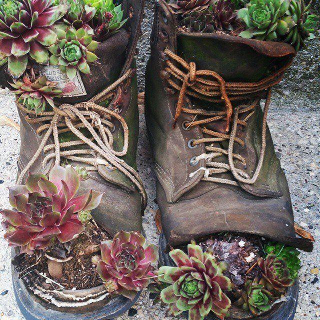 #Cactus #Cactus art #Cactus garden #Cactus indoor #Cactus plants #Household #items #planters #succulent
