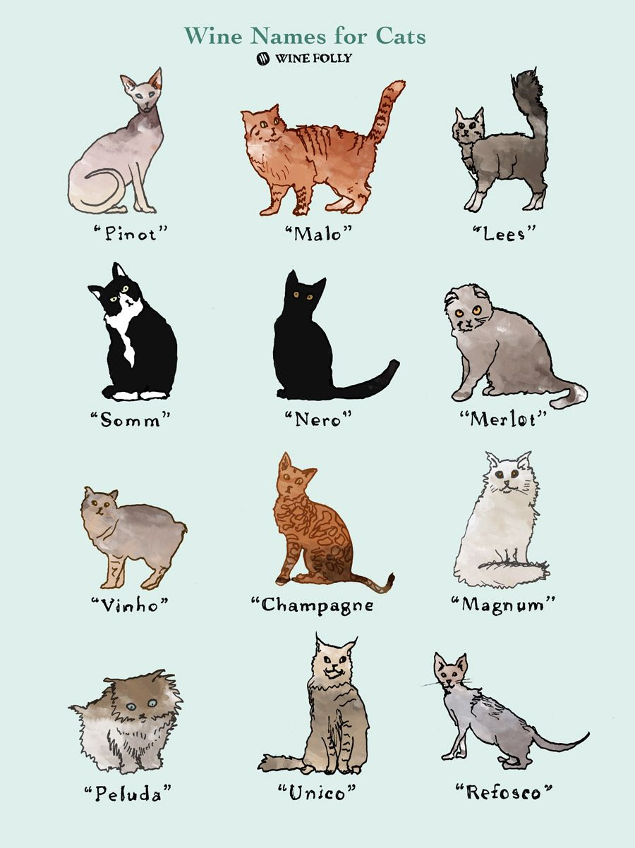 25 Perfectly Fitting Wine Names For Cats Wine Folly Cat Wine Wine Names Wine Folly