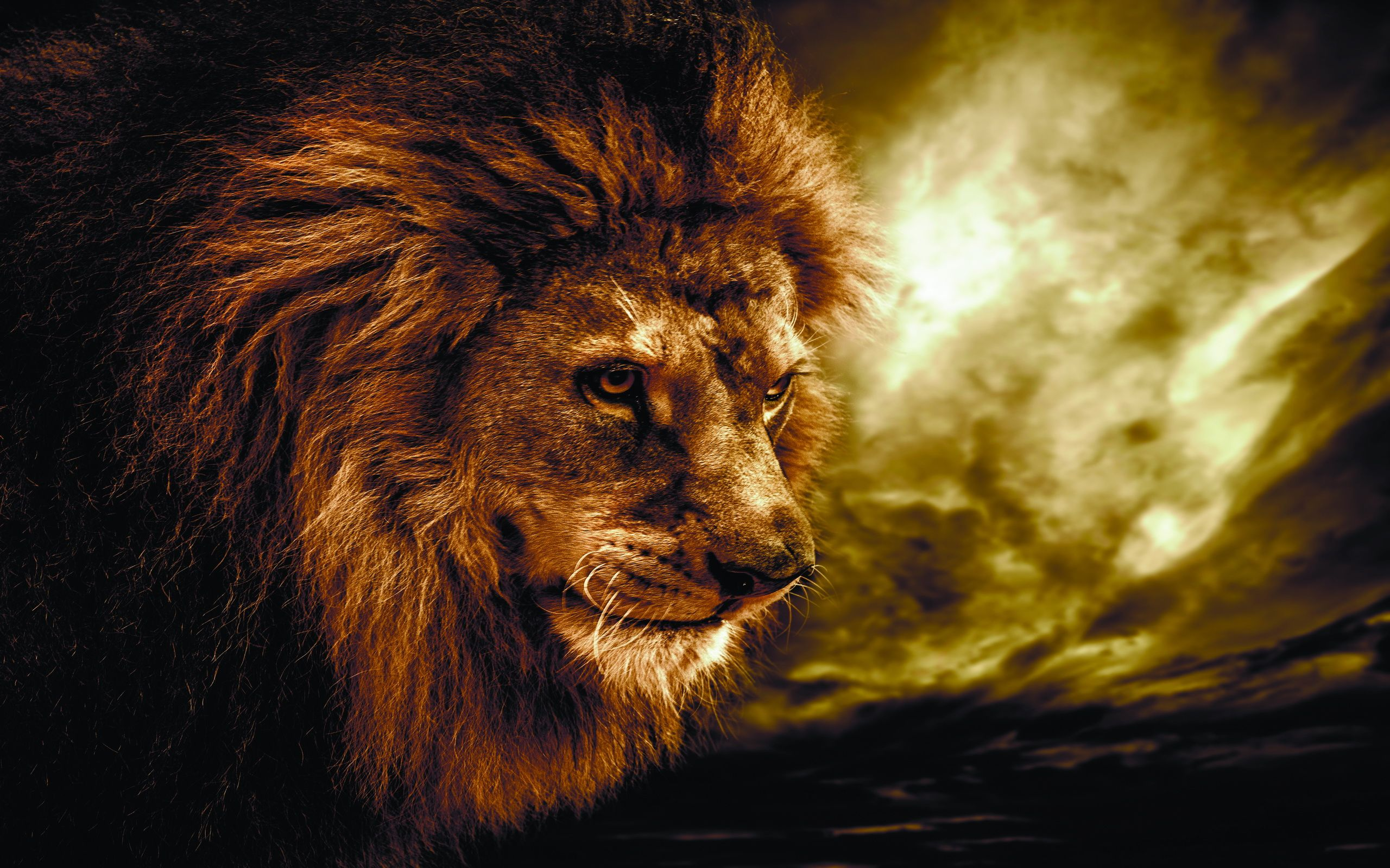 Hd wallpaper lion - Lion Hd Wallpapers Download