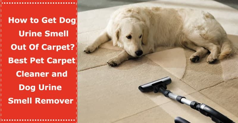 How To Get Dog Urine Smell Out Of Carpet Best Pet Carpet Cleaner And Dog Urine Smell Remover Removing Dog Urine Smell Pet Carpet Cleaners Dog Urine