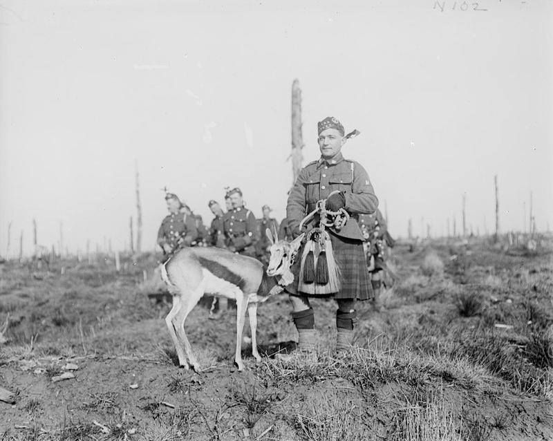 'Nancy' the 4th Regiment Mascot of the South African Forces. Delville Wood. 17 February 1918.