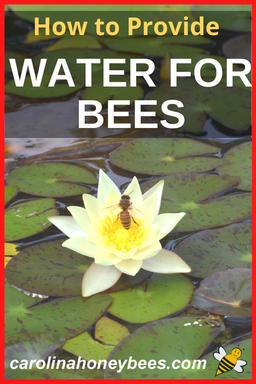 Water for Bees in Your Backyard - Carolina Honeybees in ...