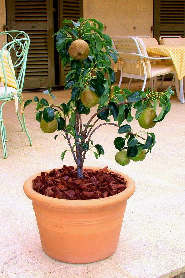 Vous adorez cueillir et déguster des fruits de saison