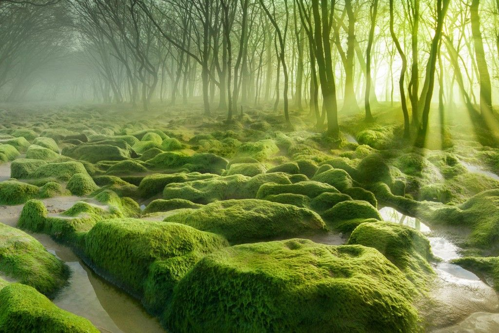 12 Of The Most Mysterious Forests In The World Forest Aquascape Landscape