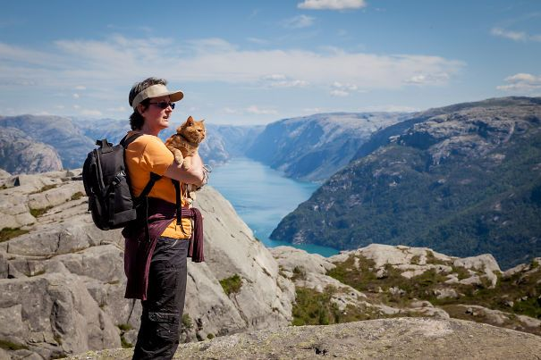 "Tesla The Viking-cat On The ""pulpitstone"" (the Top Of Lysefjorden), Norway"