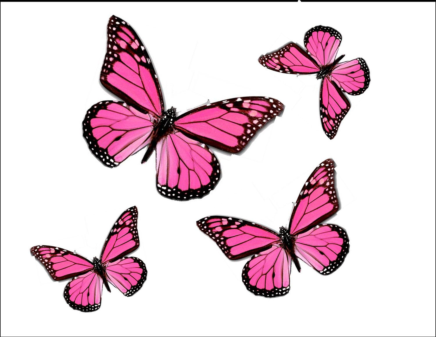 Butterfly Drawings With Color Pink Pink Monarchs. | Think...