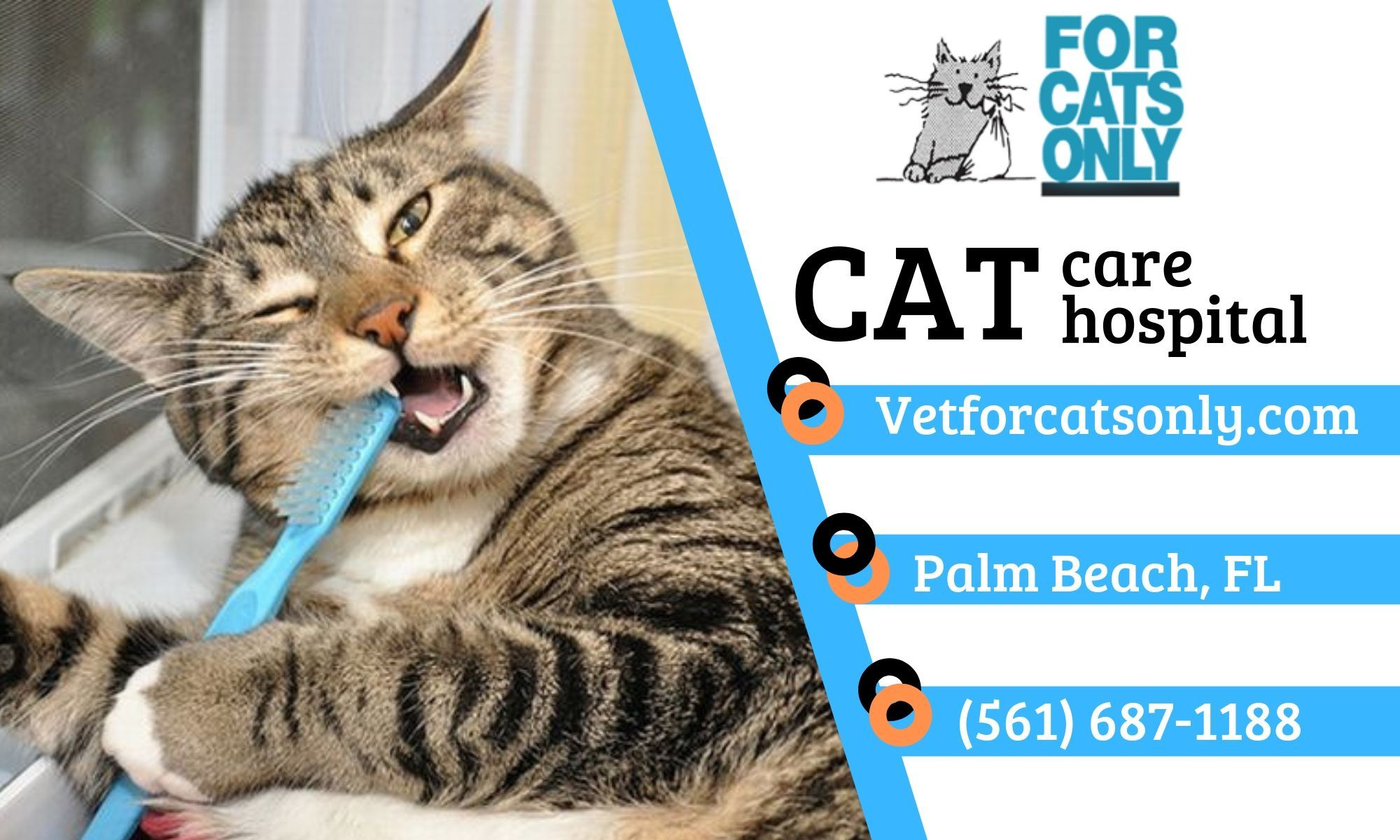 Pin by vetforcatsonly . on Cute cat Veterinary services