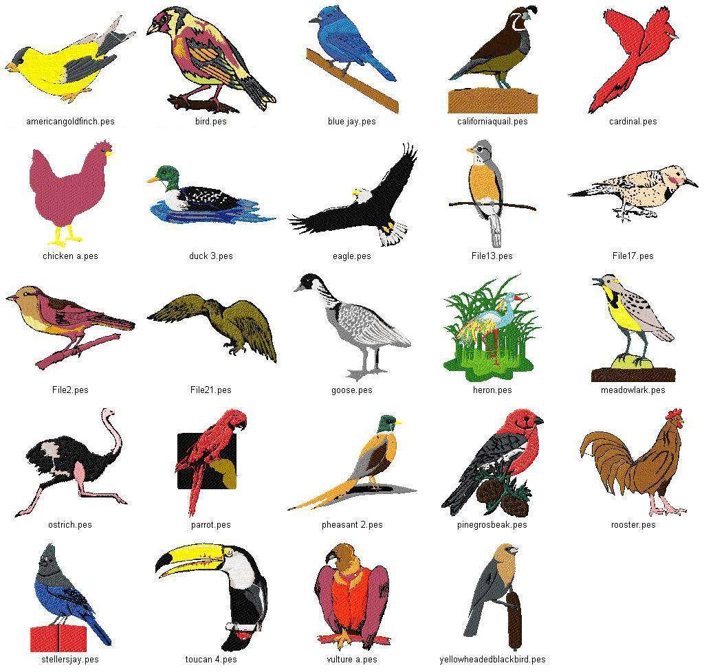 Linaria Dalmatica Designs Birds Collection