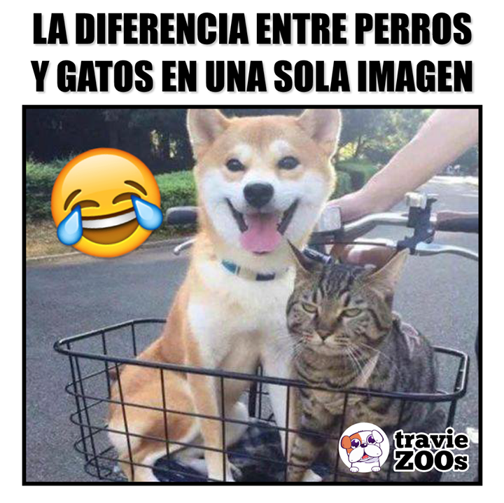 Igual De Adorables Y Suavecitos Pero Ocultan Una Enorme Diferencia Memes Divertidos Imagenes Divertidas De Animales Memes Estupidos