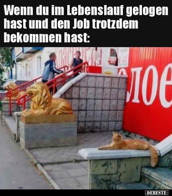 Wenn du im Lebenslauf gelogen hast und den Job trotzdem.. #animalcaptions
