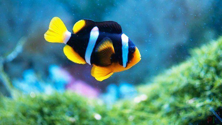 Фото рыбок http://classpic.ru/blog/foto-rybok.html ...
